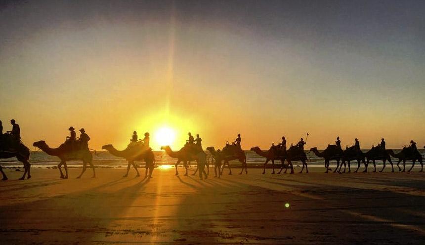 camel-rides